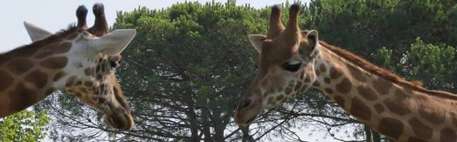 Zoo najdete kousek od Lignana.